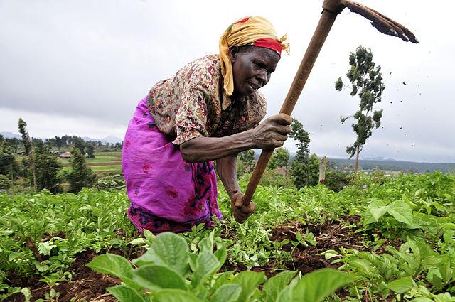 rolnictwo_kobieta_afryka